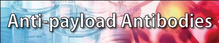 Anti-payload Antibodies