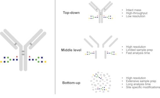 Mass-Spectrometric-Analysis-of-Antibodies-fig-2_genovis