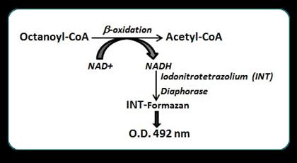 AssayGenie_Fatty_Acid_Oxidation_kit_02